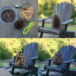 Payton Kaloper- The pine cone bird feeder steps