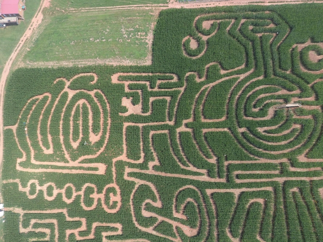 Jaemor-Corn-Maze-667x500.jpg