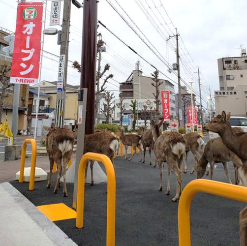 deer-502x500.png