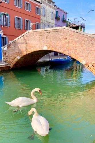 swans-331x500.jpg